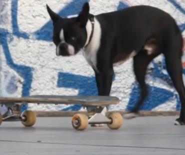 2 chiens, 1 skate et 1 skate-park