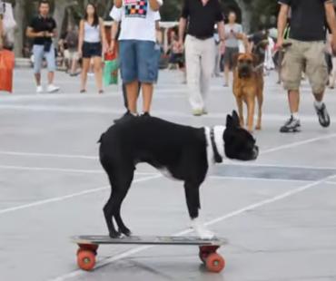 Les chiens skateurs dans montpellier